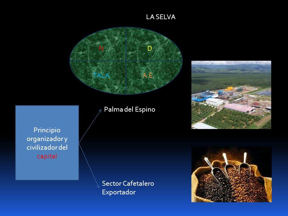 LA SELVA Palma del Espino Sector Cafetalero Exportador ND TALAA.E. Principio organizador y civilizador del capital