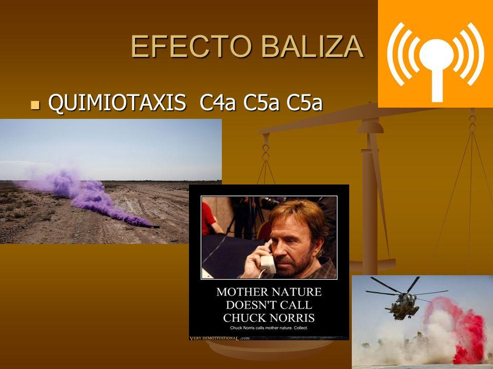 EFECTO BALIZA QUIMIOTAXIS C4a C5a C5a QUIMIOTAXIS C4a C5a C5a