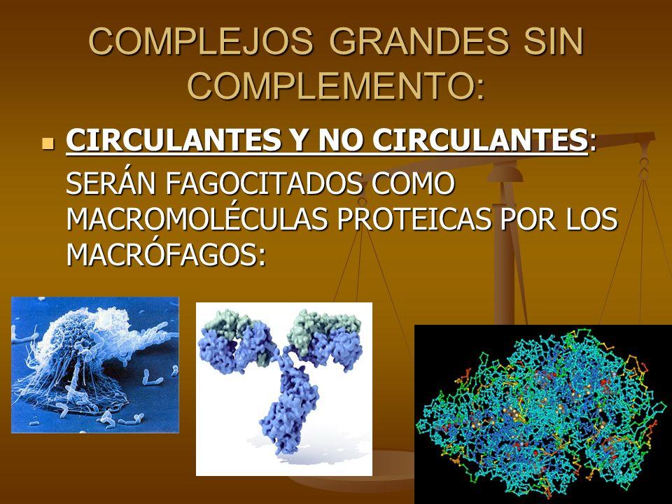 COMPLEJOS GRANDES SIN COMPLEMENTO: CIRCULANTES Y NO CIRCULANTES: CIRCULANTES Y NO CIRCULANTES: SERÁN FAGOCITADOS COMO MACROMOLÉCULAS PROTEICAS POR LOS