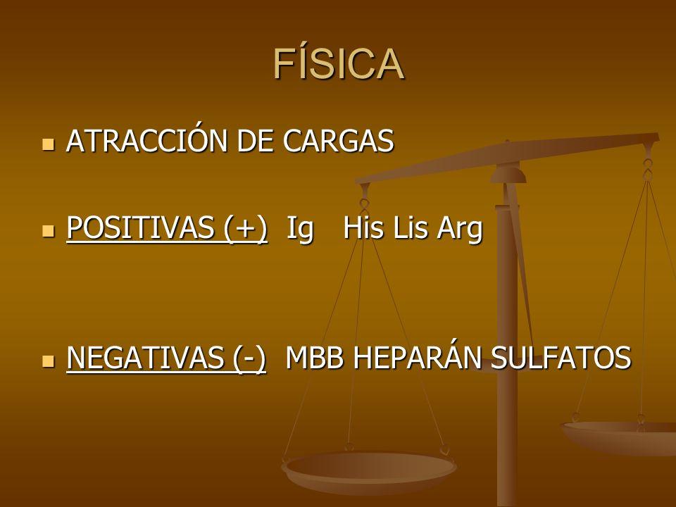 FÍSICA ATRACCIÓN DE CARGAS ATRACCIÓN DE CARGAS POSITIVAS (+) Ig His Lis Arg POSITIVAS (+) Ig His Lis Arg NEGATIVAS (-) MBB HEPARÁN SULFATOS NEGATIVAS