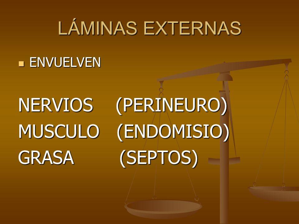 LÁMINAS EXTERNAS ENVUELVEN ENVUELVEN NERVIOS (PERINEURO) MUSCULO (ENDOMISIO) GRASA (SEPTOS)