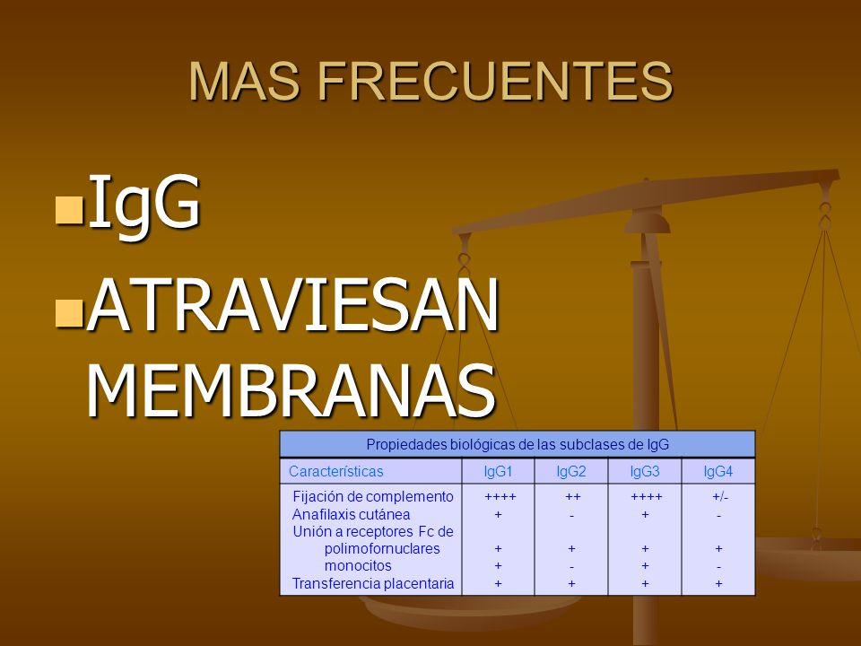 MAS FRECUENTES IgG IgG ATRAVIESAN MEMBRANAS ATRAVIESAN MEMBRANAS Propiedades biológicas de las subclases de IgG CaracterísticasIgG1IgG2IgG3IgG4 Fijaci