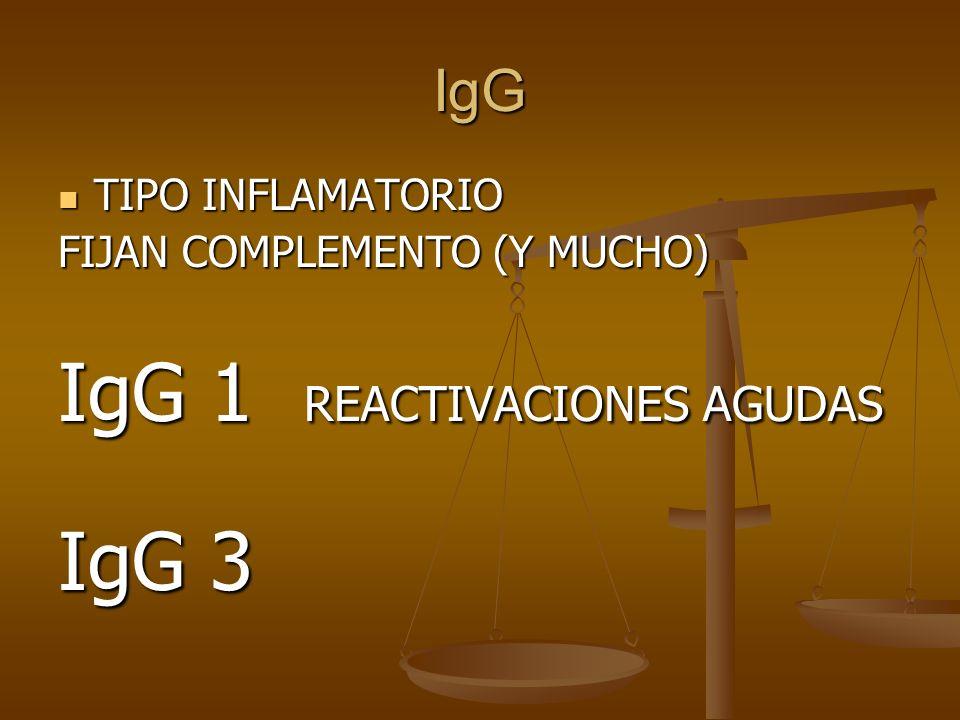 IgG TIPO INFLAMATORIO TIPO INFLAMATORIO FIJAN COMPLEMENTO (Y MUCHO) IgG 1 REACTIVACIONES AGUDAS IgG 3