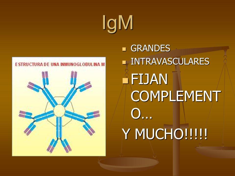 IgM GRANDES INTRAVASCULARES FIJAN COMPLEMENT O… Y MUCHO!!!!!