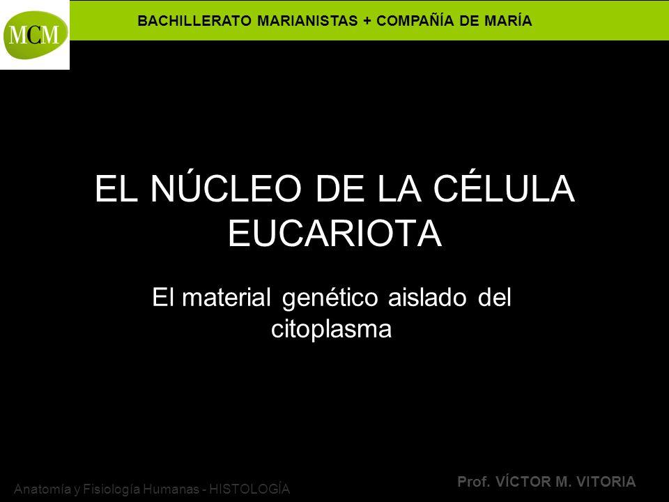 BACHILLERATO MARIANISTAS + COMPAÑÍA DE MARÍA Prof. VÍCTOR M. VITORIA Anatomía y Fisiología Humanas - HISTOLOGÍA EL NÚCLEO DE LA CÉLULA EUCARIOTA El ma