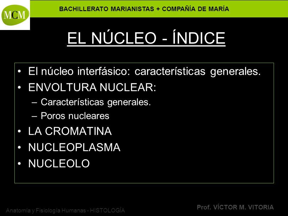 BACHILLERATO MARIANISTAS + COMPAÑÍA DE MARÍA Prof. VÍCTOR M. VITORIA Anatomía y Fisiología Humanas - HISTOLOGÍA EL NÚCLEO - ÍNDICE El núcleo interfási