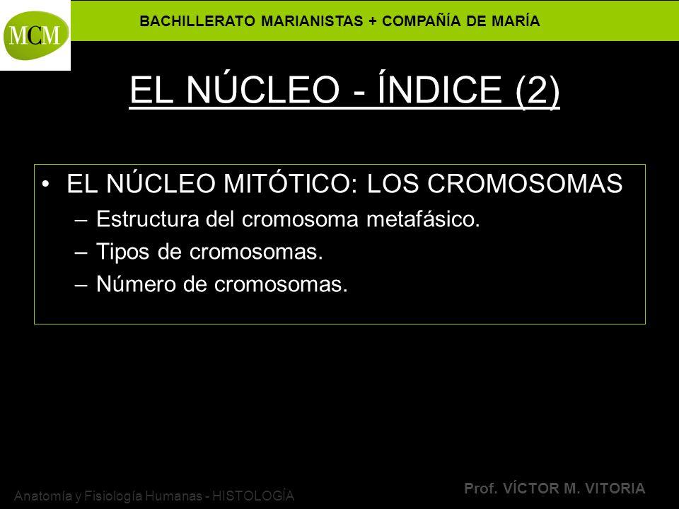 BACHILLERATO MARIANISTAS + COMPAÑÍA DE MARÍA Prof. VÍCTOR M. VITORIA Anatomía y Fisiología Humanas - HISTOLOGÍA EL NÚCLEO - ÍNDICE (2) EL NÚCLEO MITÓT
