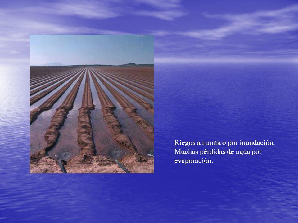 Riegos a manta o por inundación. Muchas pérdidas de agua por evaporación.