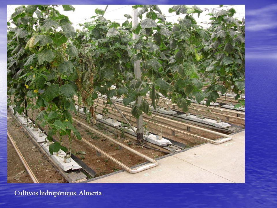 Cultivos hidropónicos. Almería.