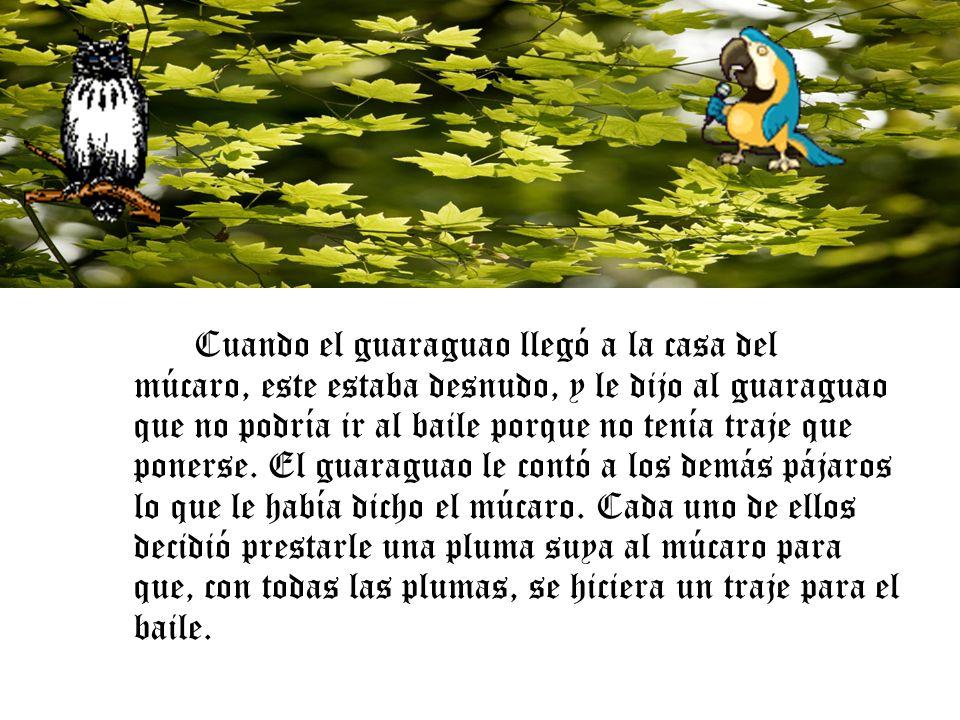 El guaraguao recogió todas las plumas, que eran de distintos colores, y se las llevó al múcaro para que se hiciese el traje, pero con la condición de que después del baile devolviera a cada pájaro su pluma.