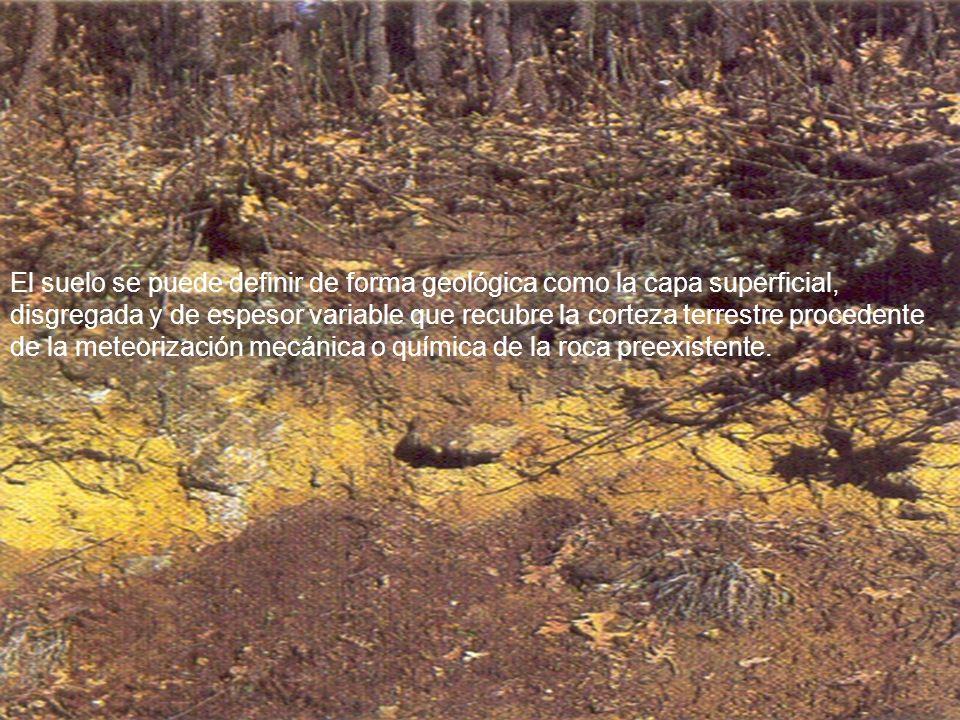 El suelo se puede definir de forma geológica como la capa superficial, disgregada y de espesor variable que recubre la corteza terrestre procedente de
