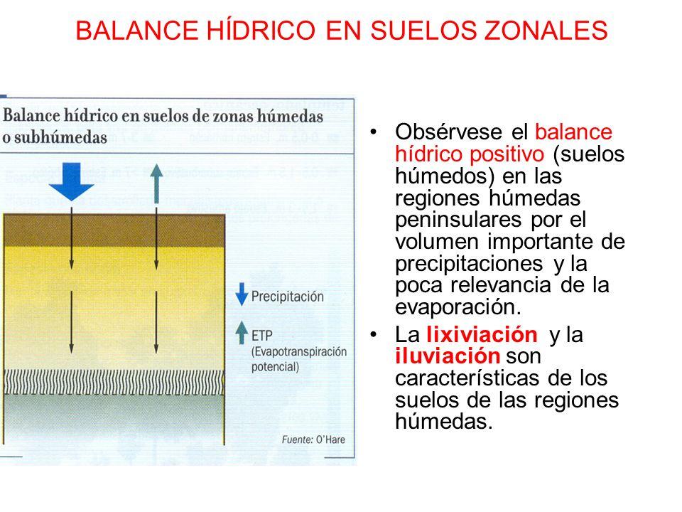 BALANCE HÍDRICO EN SUELOS ZONALES Obsérvese el balance hídrico positivo (suelos húmedos) en las regiones húmedas peninsulares por el volumen important
