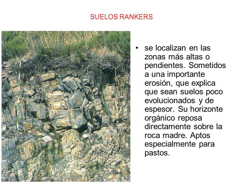 SUELOS RANKERS se localizan en las zonas más altas o pendientes. Sometidos a una importante erosión, que explica que sean suelos poco evolucionados y