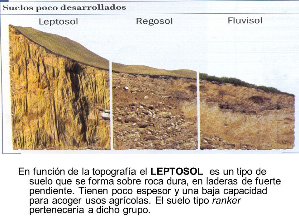 En función de la topografía el LEPTOSOL es un tipo de suelo que se forma sobre roca dura, en laderas de fuerte pendiente. Tienen poco espesor y una ba