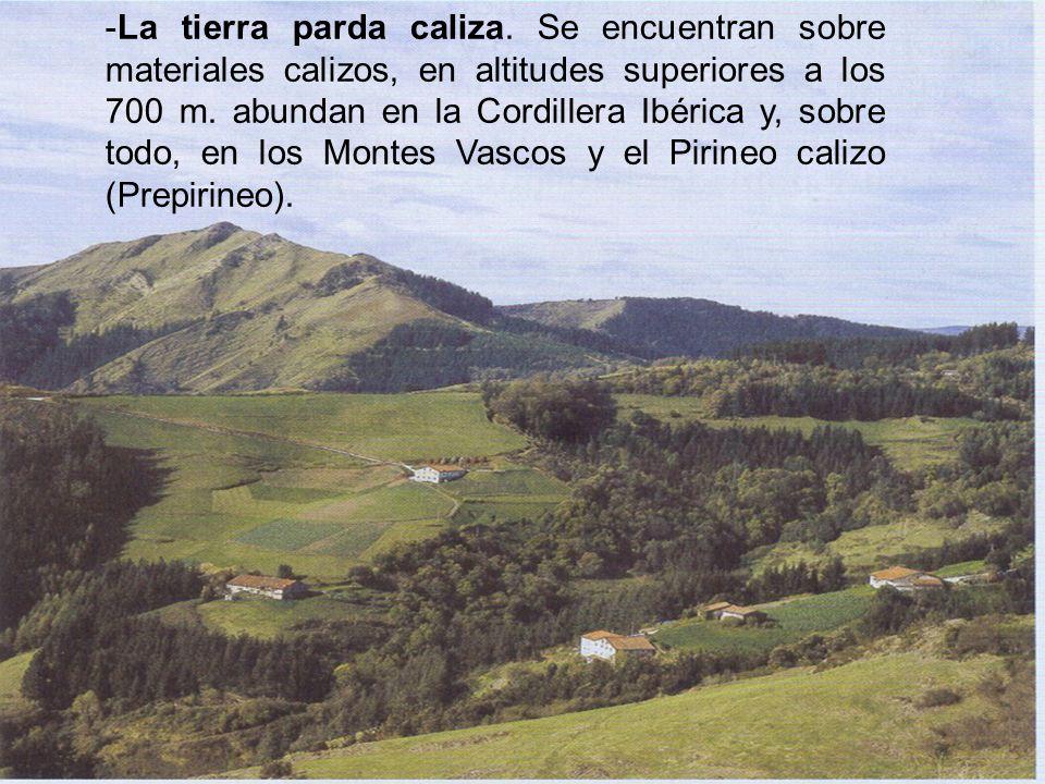 -La tierra parda caliza. Se encuentran sobre materiales calizos, en altitudes superiores a los 700 m. abundan en la Cordillera Ibérica y, sobre todo,
