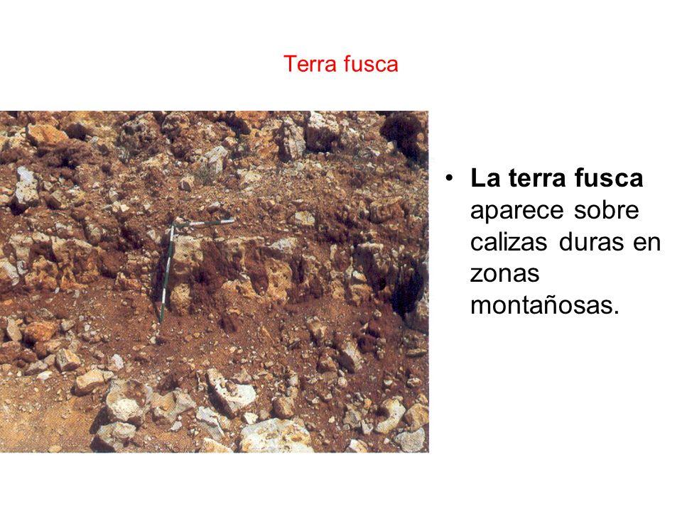 Terra fusca La terra fusca aparece sobre calizas duras en zonas montañosas.