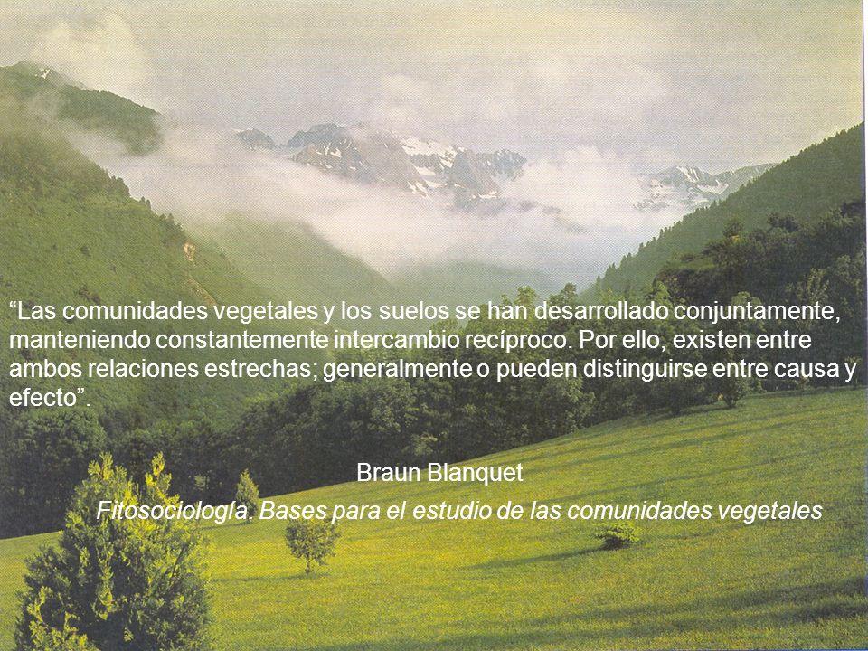 Las comunidades vegetales y los suelos se han desarrollado conjuntamente, manteniendo constantemente intercambio recíproco. Por ello, existen entre am