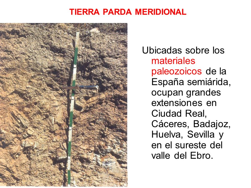 TIERRA PARDA MERIDIONAL Ubicadas sobre los materiales paleozoicos de la España semiárida, ocupan grandes extensiones en Ciudad Real, Cáceres, Badajoz,