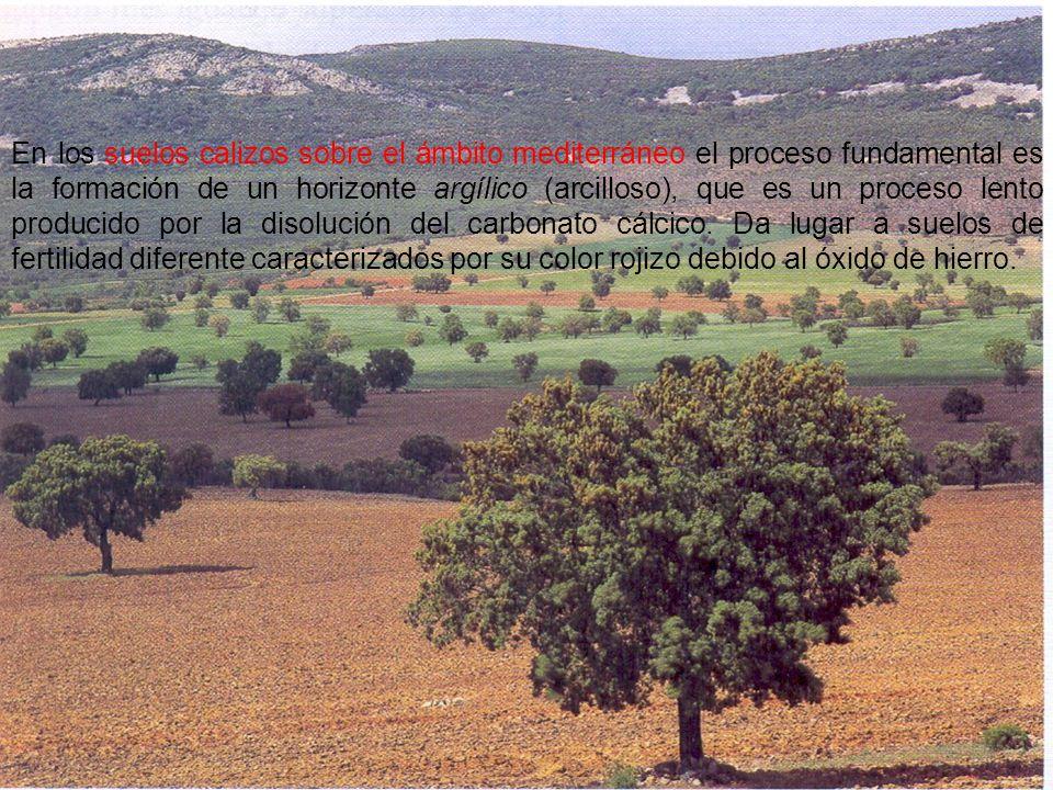 En los suelos calizos sobre el ámbito mediterráneo el proceso fundamental es la formación de un horizonte argílico (arcilloso), que es un proceso lent