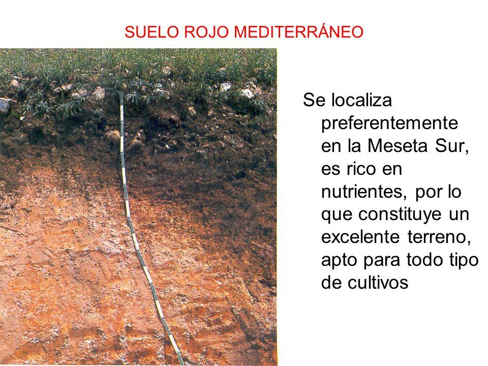 SUELO ROJO MEDITERRÁNEO Se localiza preferentemente en la Meseta Sur, es rico en nutrientes, por lo que constituye un excelente terreno, apto para tod