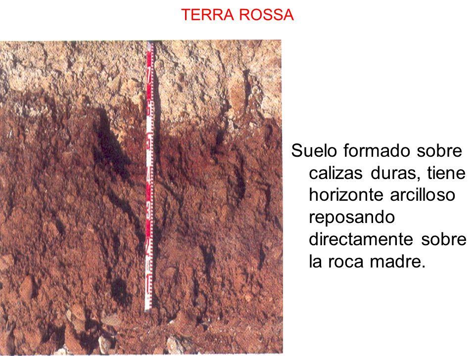 TERRA ROSSA Suelo formado sobre calizas duras, tiene horizonte arcilloso reposando directamente sobre la roca madre.