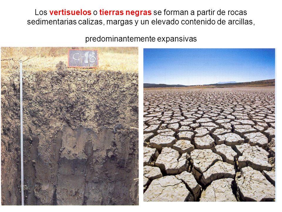 Los vertisuelos o tierras negras se forman a partir de rocas sedimentarias calizas, margas y un elevado contenido de arcillas, predominantemente expan