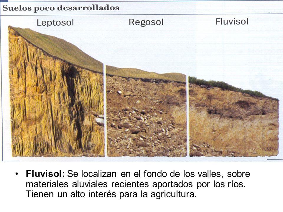 Fluvisol: Se localizan en el fondo de los valles, sobre materiales aluviales recientes aportados por los ríos. Tienen un alto interés para la agricult