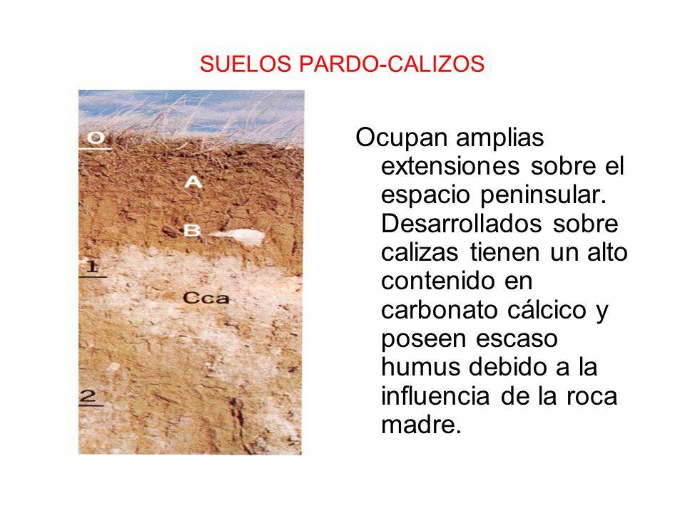 SUELOS PARDO-CALIZOS Ocupan amplias extensiones sobre el espacio peninsular. Desarrollados sobre calizas tienen un alto contenido en carbonato cálcico