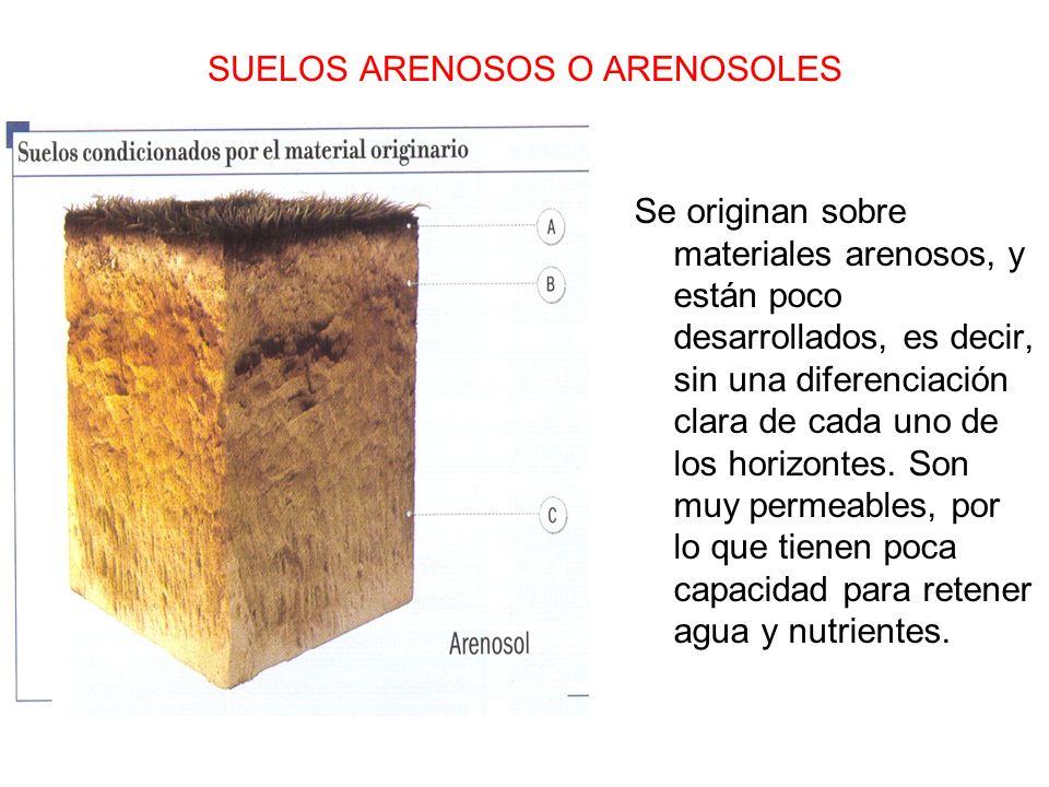 SUELOS ARENOSOS O ARENOSOLES Se originan sobre materiales arenosos, y están poco desarrollados, es decir, sin una diferenciación clara de cada uno de