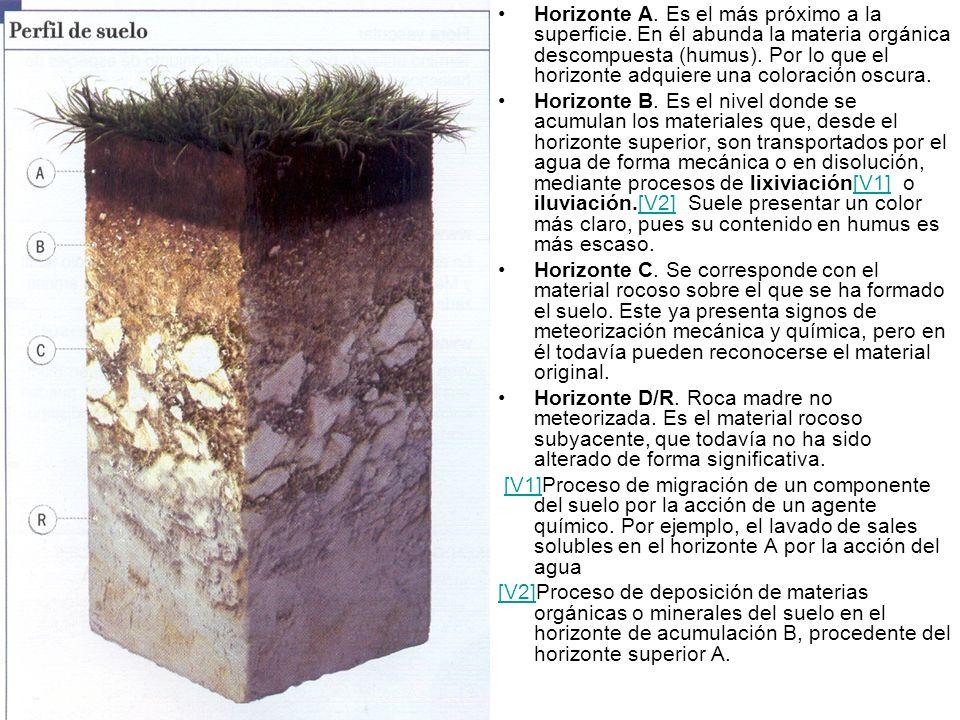 Horizonte A. Es el más próximo a la superficie. En él abunda la materia orgánica descompuesta (humus). Por lo que el horizonte adquiere una coloración