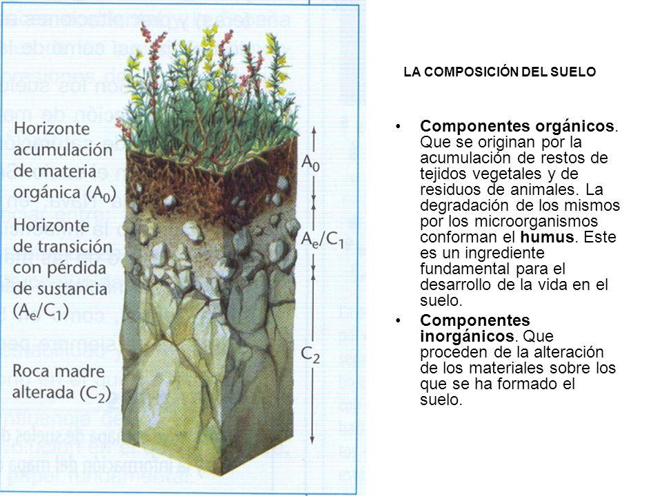 LA COMPOSICIÓN DEL SUELO Componentes orgánicos. Que se originan por la acumulación de restos de tejidos vegetales y de residuos de animales. La degrad