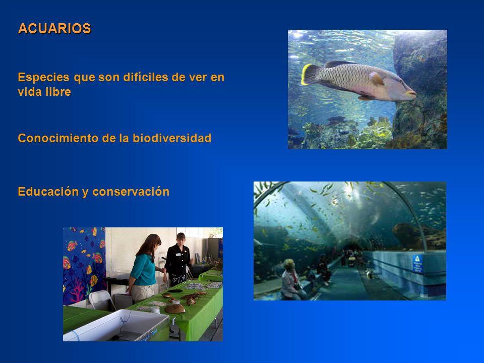 ACUARIOS Especies que son difíciles de ver en vida libre Conocimiento de la biodiversidad Educación y conservación