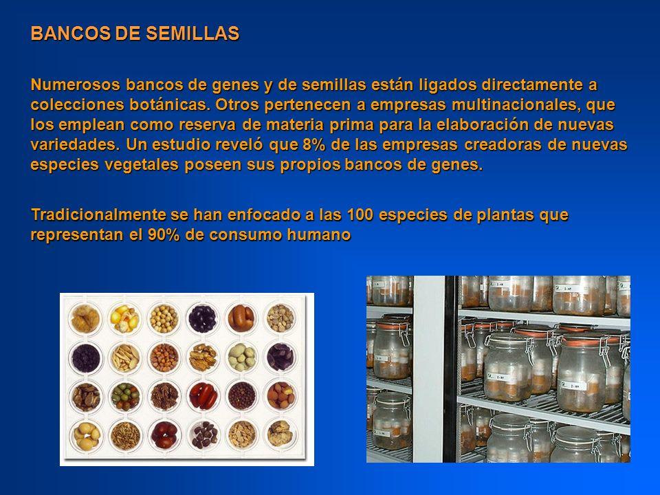 BANCOS DE SEMILLAS Numerosos bancos de genes y de semillas están ligados directamente a colecciones botánicas. Otros pertenecen a empresas multinacion