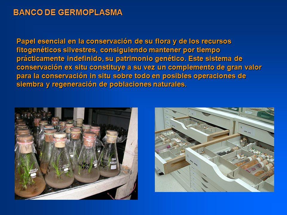 BANCO DE GERMOPLASMA Papel esencial en la conservación de su flora y de los recursos fitogenéticos silvestres, consiguiendo mantener por tiempo prácti