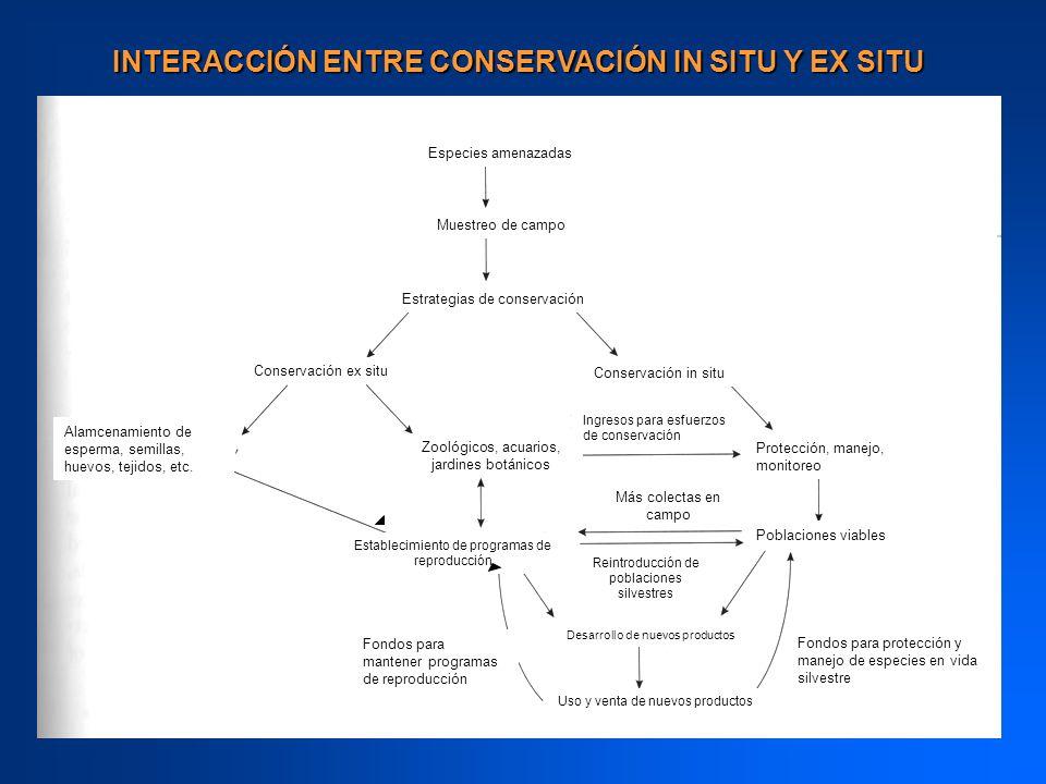 INTERACCIÓN ENTRE CONSERVACIÓN IN SITU Y EX SITU Especies amenazadas Muestreo de campo Estrategias de conservación Protección, manejo, monitoreo Zooló