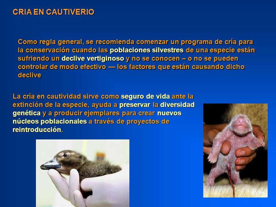 CRIA EN CAUTIVERIO Como regla general, se recomienda comenzar un programa de cría para la conservación cuando las poblaciones silvestres de una especi