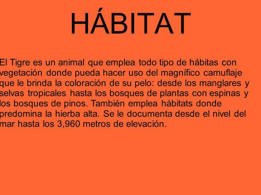 HÁBITAT El Tigre es un animal que emplea todo tipo de hábitas con vegetación donde pueda hacer uso del magnífico camuflaje que le brinda la coloración