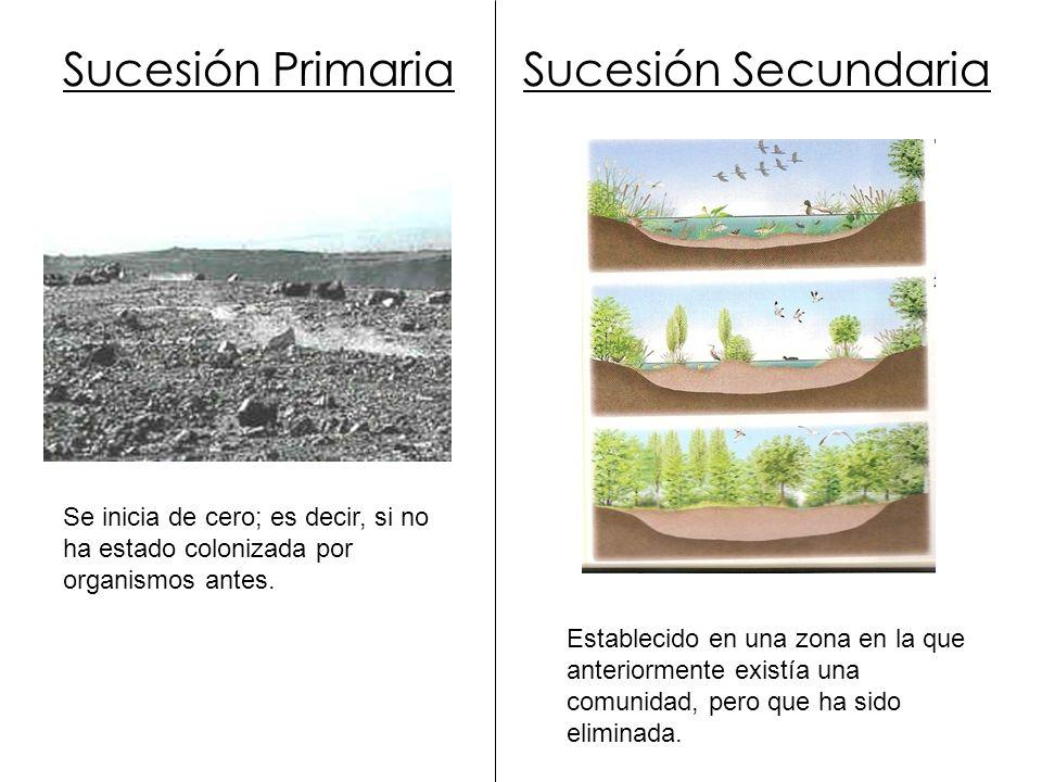 Sucesión Primaria Se inicia de cero; es decir, si no ha estado colonizada por organismos antes. Sucesión Secundaria Establecido en una zona en la que