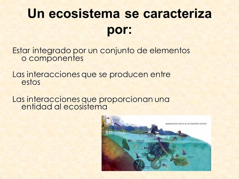 Un ecosistema se caracteriza por: Estar integrado por un conjunto de elementos o componentes Las interacciones que se producen entre estos Las interac