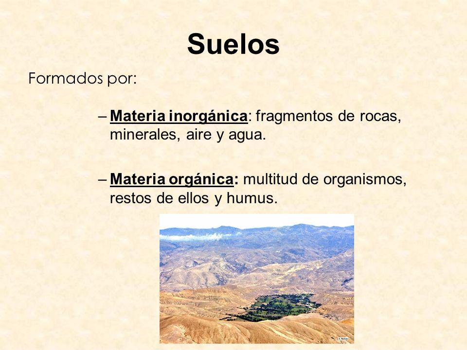 Suelos Formados por: –Materia inorgánica: fragmentos de rocas, minerales, aire y agua. –Materia orgánica: multitud de organismos, restos de ellos y hu