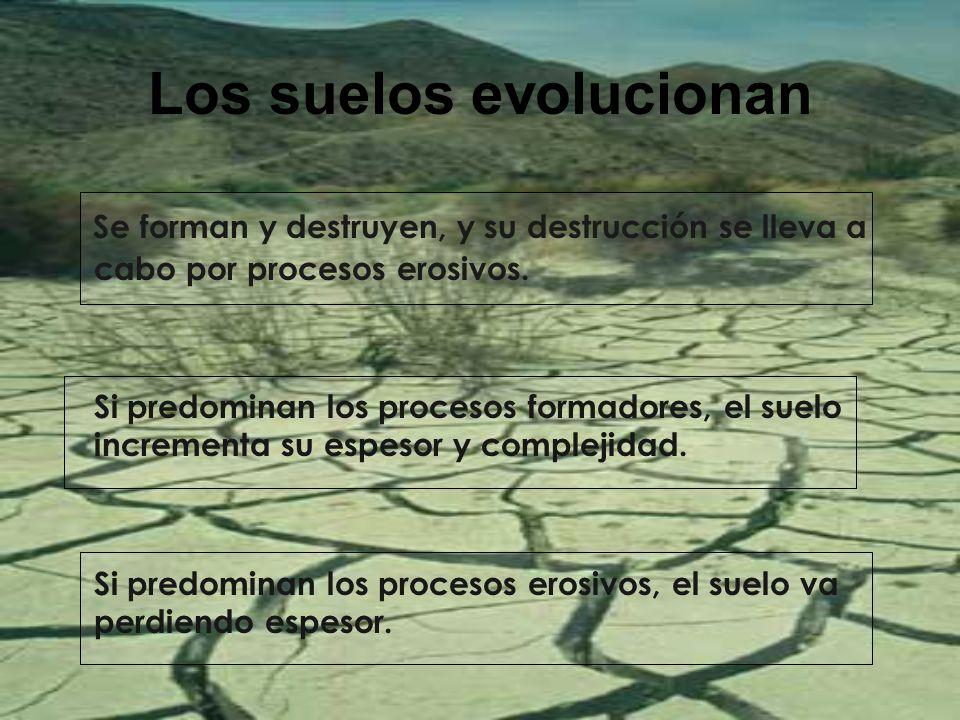 Los suelos evolucionan Se forman y destruyen, y su destrucción se lleva a cabo por procesos erosivos. Si predominan los procesos formadores, el suelo