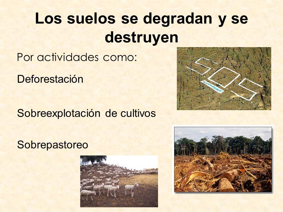 Los suelos se degradan y se destruyen Por actividades como: Deforestación Sobreexplotación de cultivos Sobrepastoreo