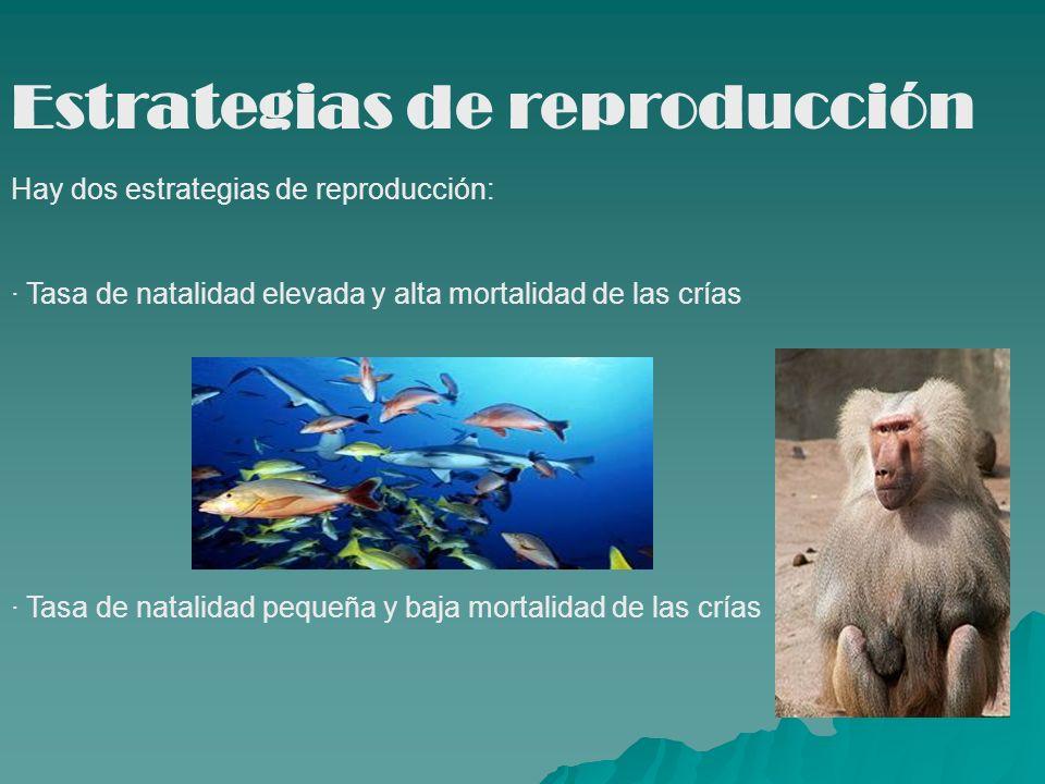Estrategias de reproducción Hay dos estrategias de reproducción: · Tasa de natalidad elevada y alta mortalidad de las crías · Tasa de natalidad pequeñ