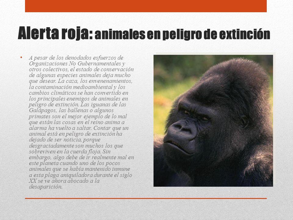 Alerta roja: animales en peligro de extinción A pesar de los denodados esfuerzos de Organizaciones No Gubernamentales y otros colectivos, el estado de