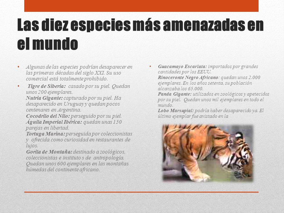 Las diez especies más amenazadas en el mundo Algunas de las especies podrían desaparecer en las primeras décadas del siglo XXI. Su uso comercial está