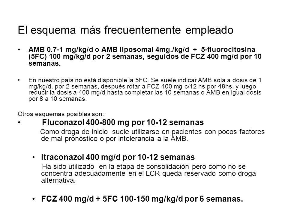 El esquema más frecuentemente empleado AMB 0.7-1 mg/kg/d o AMB liposomal 4mg./kg/d + 5-fluorocitosina (5FC) 100 mg/kg/d por 2 semanas, seguidos de FCZ