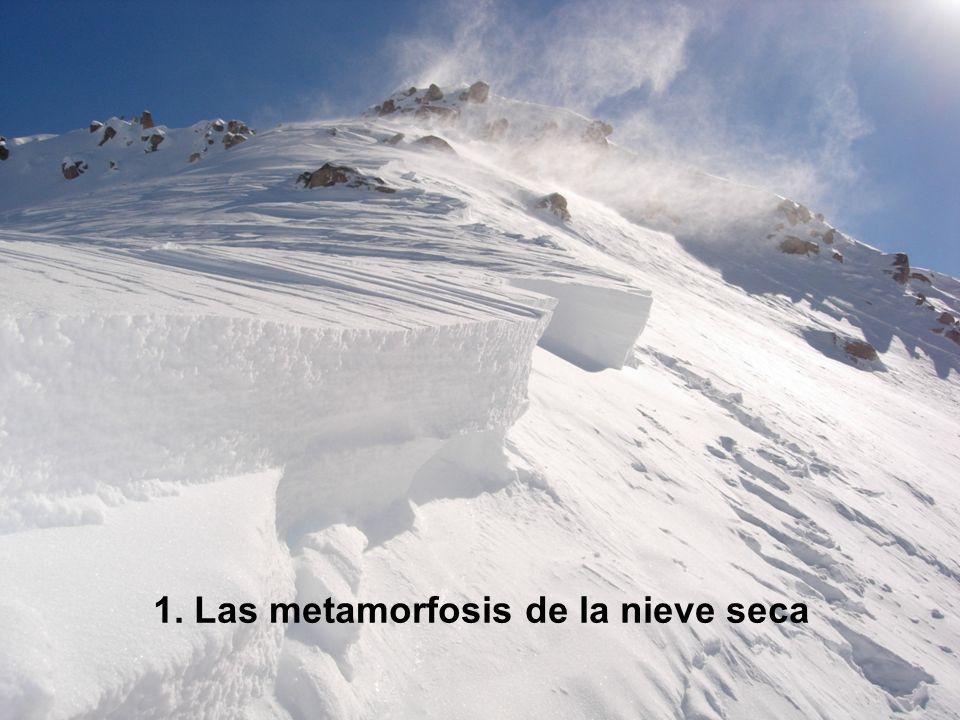 1. Las metamorfosis de la nieve seca