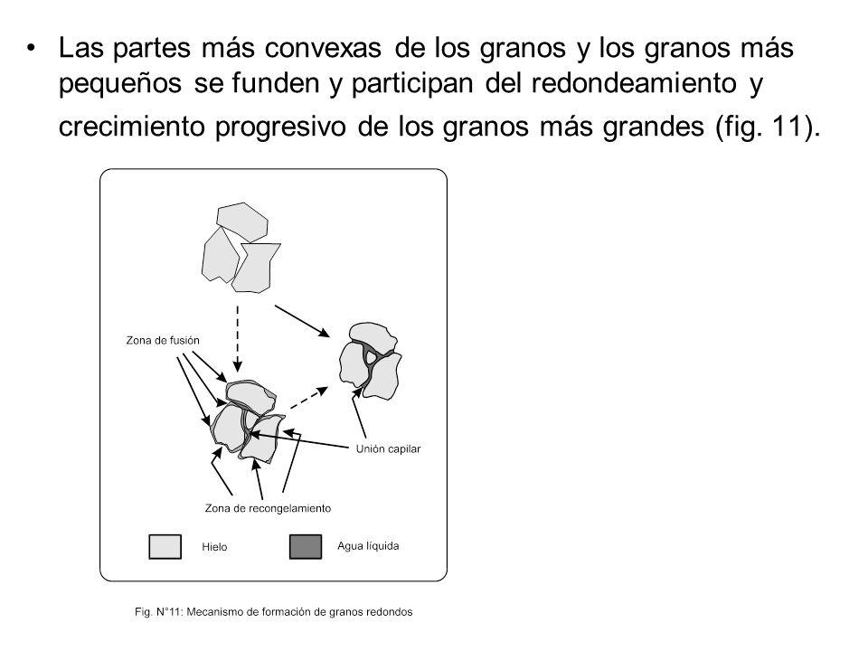 Las partes más convexas de los granos y los granos más pequeños se funden y participan del redondeamiento y crecimiento progresivo de los granos más g