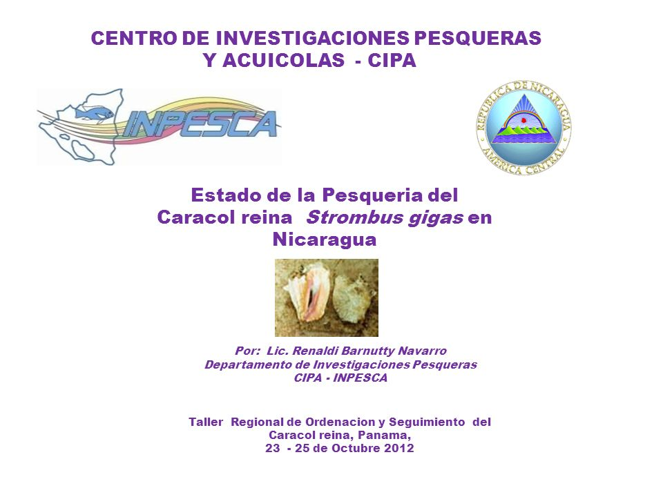 CENTRO DE INVESTIGACIONES PESQUERAS Y ACUICOLAS - CIPA Por: Lic. Renaldi Barnutty Navarro Departamento de Investigaciones Pesqueras CIPA - INPESCA Tal