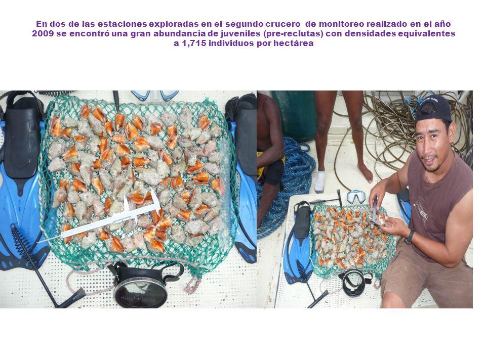 En dos de las estaciones exploradas en el segundo crucero de monitoreo realizado en el año 2009 se encontró una gran abundancia de juveniles (pre-recl